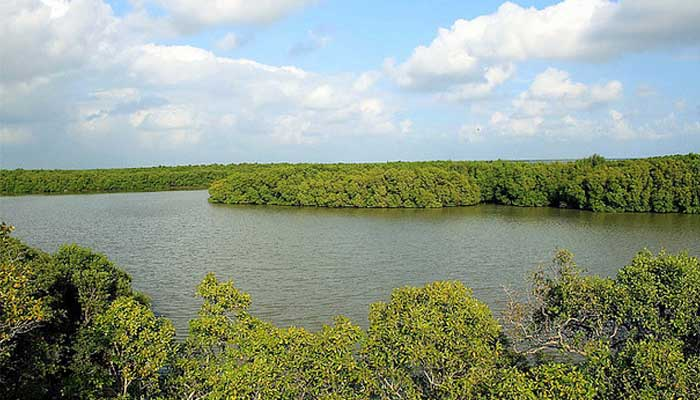 Muthupet Lagoon Mangroves Forest