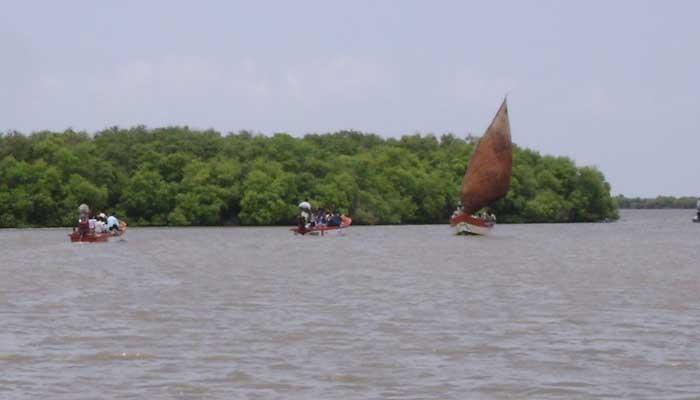 Flora Fauna Mangrove Forest