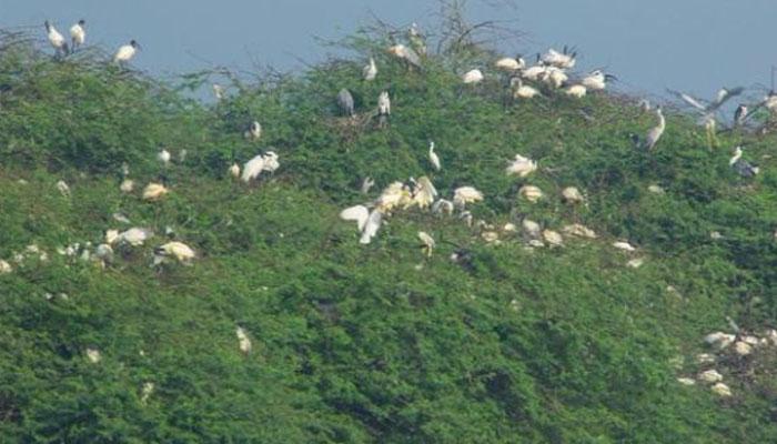 Flora Fauna Muthupet Lagoon