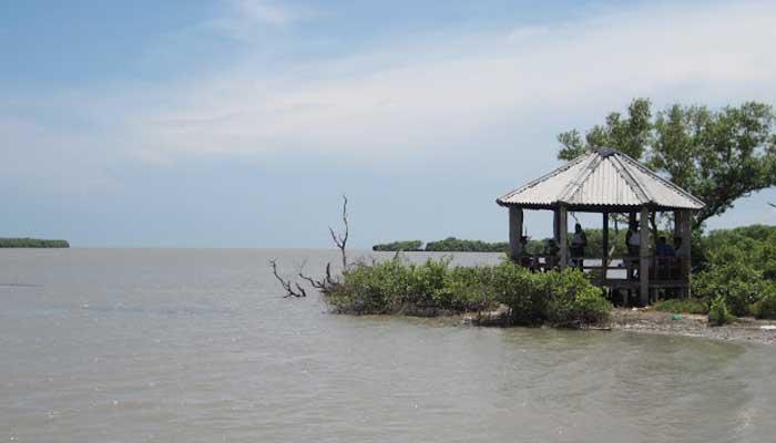 Mangroves Forest Tamilnadu