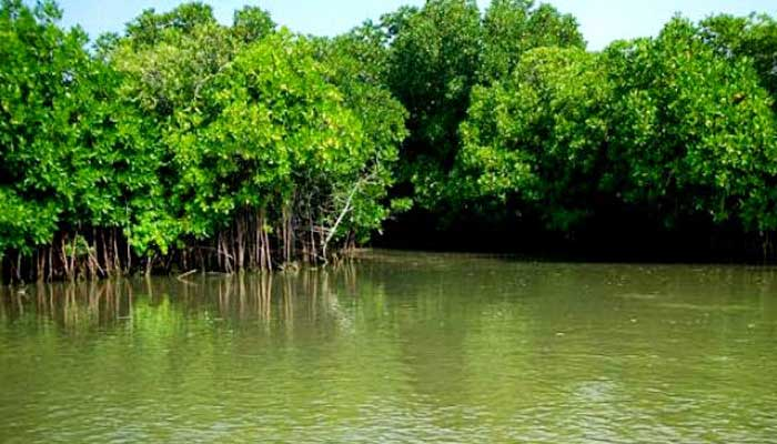 Mangroves Lagoon Tamilnadu